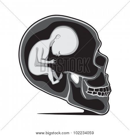 Fetus Inside of the Human Skull