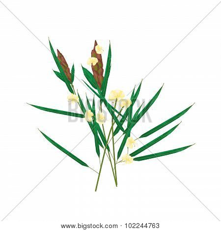 Beautiful Flower Illustration of Barleria Lupulina Lindl Flower with Green Leaves Isolated on White Background. poster
