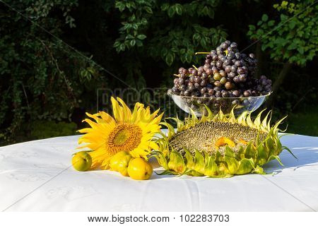 Gifts Of Autumn - Sunflower, Sunflower Seeds, Orange Flowers, Vines And Gold A Tea Maker. Isabella G