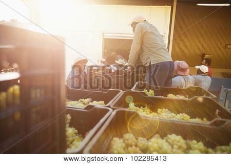 Grapes Ready To Unload At The Wine Factory