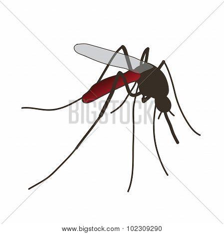 mosquito. a realistic mosquito.