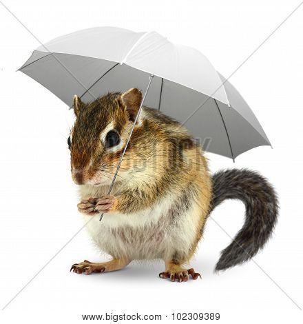 Funny Squirrel  Under Umbrella On White, Weather Creative Concept