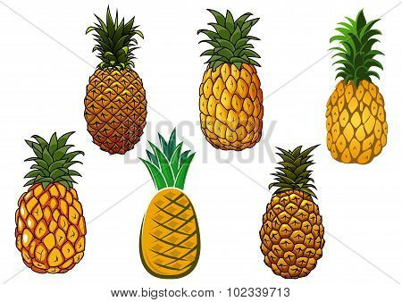 Tropical ripe yellow pineapple fruits