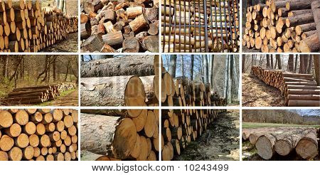 Wood Piles Collage.