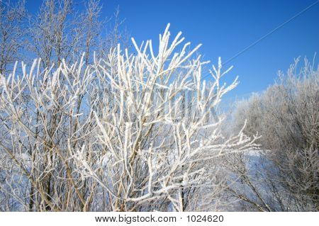 March Frost
