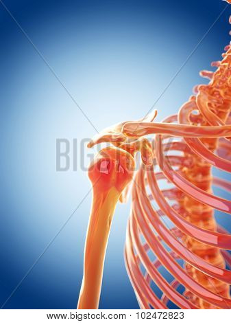 glass skeleton illustration - the shoulder joint