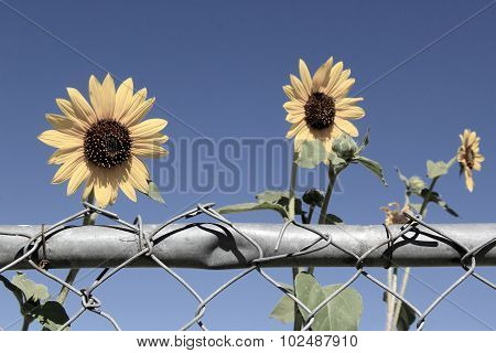 Conceptual image of hope