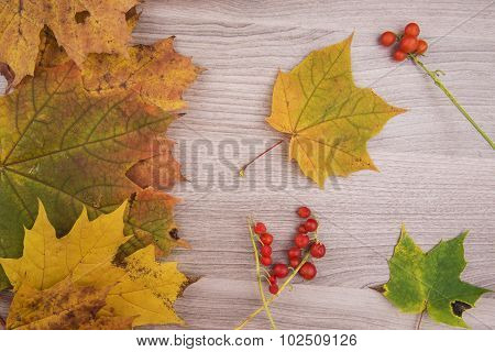 Autumn Maple Leaves On Wooden Background