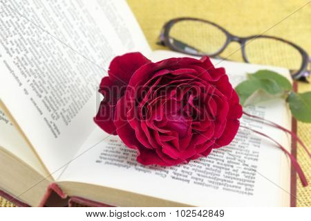 Red Rose On A Open Book With Blurred Content