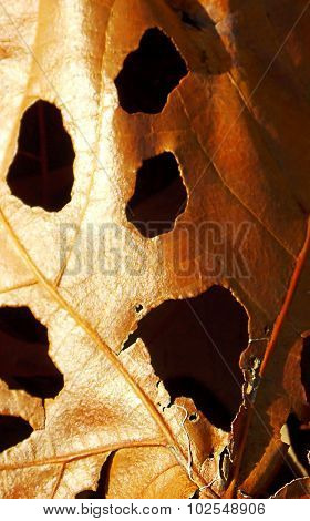 Ghoulish Face in Autumn Leaf