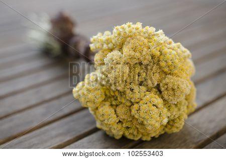 Immortelle Bouquet
