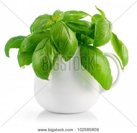 Fresh leaves basil in white vase. Isolated on white background. Illustration
