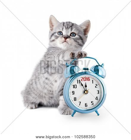 kitten with alarm clock displaying 2016 year