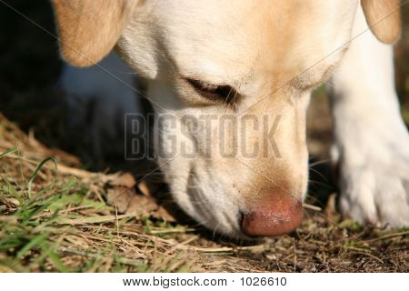 Dog Sniffing