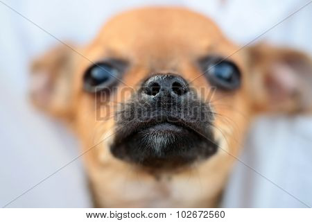 Dogs Face