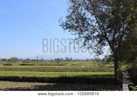 Beautiful Landscape Nature in Jogja city, Ypgyakarta,  Indonesia