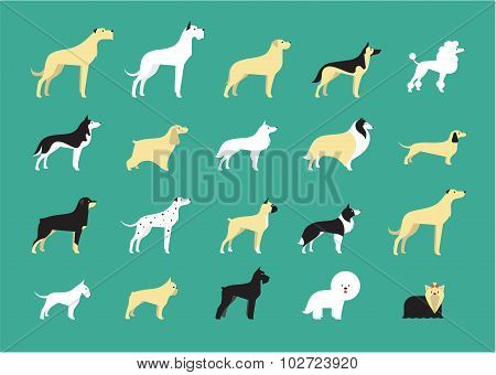 dog breeds illustration