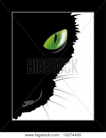 Black cat with green eye