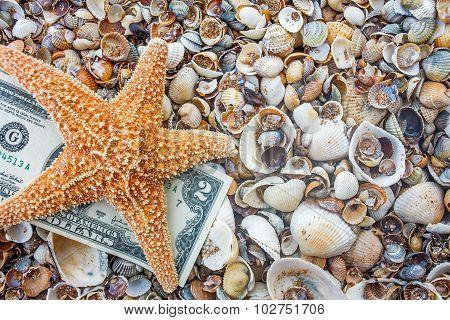 Seastar and dollar note on sea coast