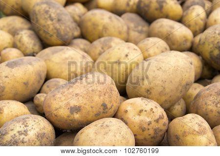 Unwashed Potato