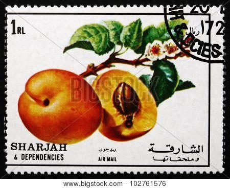 Postage Stamp Sharjah 1972 Peach, Fruit