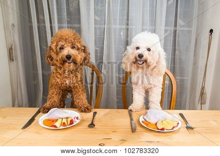 Concept Of Excited Dogs Having Delicious Raw Meat Meal On Table.