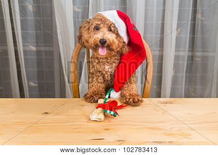 Concept Of Excited Dog On Santa Hat With Christmas Gift  On Table.