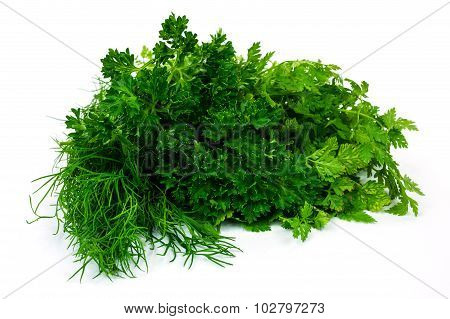 Herbs Collection On White