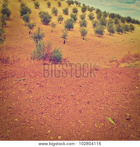 The Olive Grove in Spain Instagram Effect poster