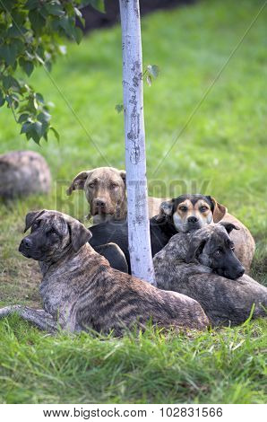 Dogs Lying Around A Tree