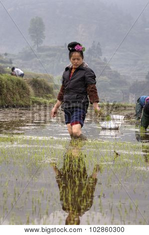 Peasant Woman standing  of ankle-deep mud, in the middle ricefield.