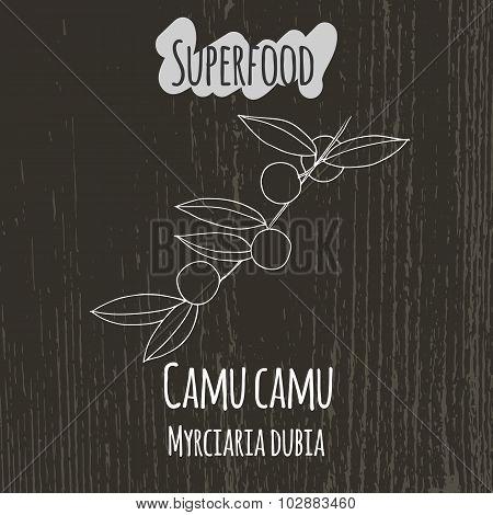 Hand drawing illustration of camu camu. Myrciaria dubia