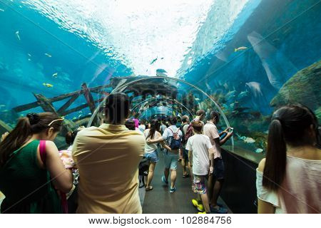 Resorts World Sentosa Singapore- August 10: People watching big aquarium in S.E.A Aquarium on August 10 2014.