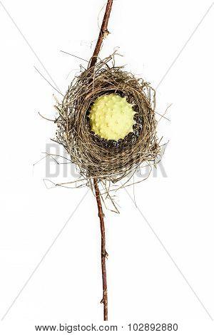 Conceptual Bird Nest.
