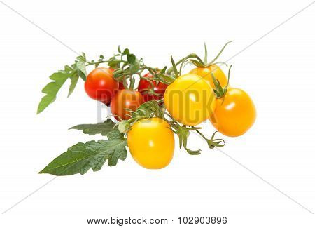 Yellow And Red Tomatoes