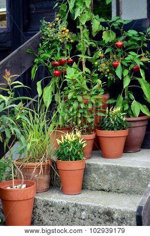 Container Garden Vegetables Plants In Pot.
