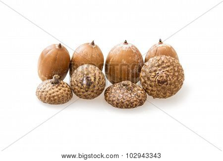 Group Of Acorns On The White Background