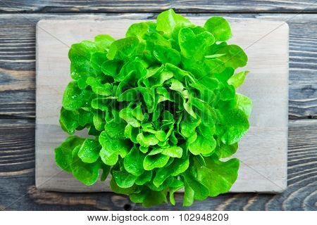Fresh green lettuce salad. Detox, diet or healthy food concept