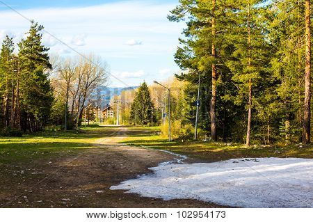 Spring in the woods. Snow and green trees