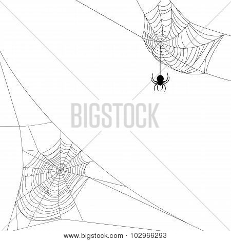 two spider webs