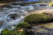 Flowing water over stones with green moss. Hermon (Banias) river Israel. poster