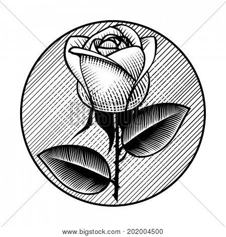 Round retro icon and label with white rose. Vintage engraving stylized drawing