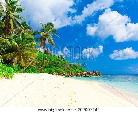 Palms Summertime Panorama