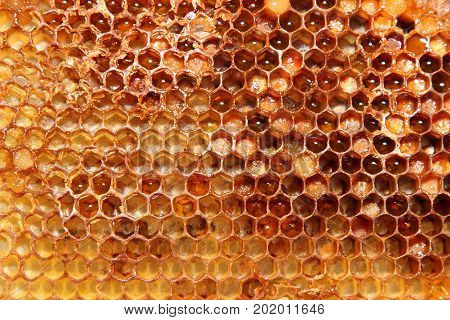 Bee honeycombs with honey of yellow color with a brown tinge