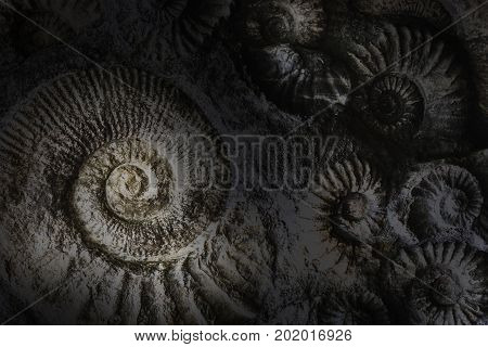 Spirlas abstract background. Fossils of ancient world dark background
