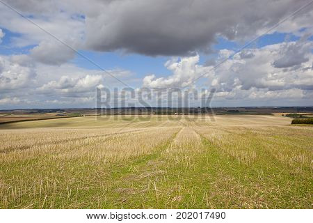 extensive harvested wheat fields with straw stubble under a blue cloudy summer sky in the yorkshire wolds