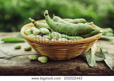 Fresh green broad beans in the open air. Healthy food. Natural light