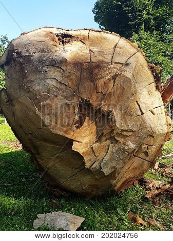 Photo of lying felled tree trunk in forest