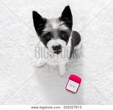 Wedding Proposal Dog With Marraige Ring