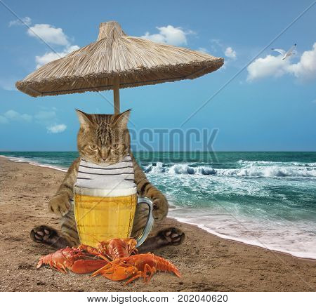 The cat is next to a big mug of beer and a boiled crayfish on the beach.